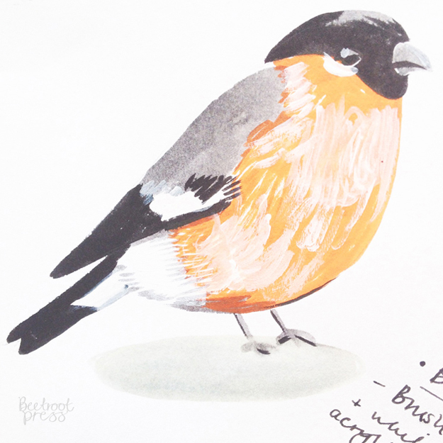 Bullfinch illustration Sarah Papworth