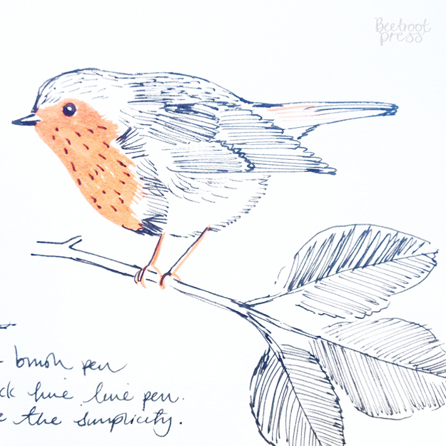 Robin sketch illustration by Sarah Papworth