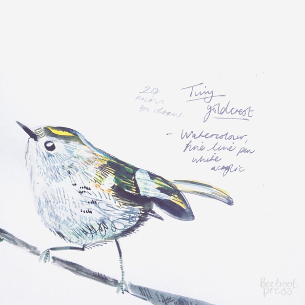 Tiny goldcrest illustration by Sarah Papworth